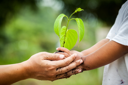 Photo pour Child with parents hand holding young tree in soil together for prepare plant on ground,save world concept - image libre de droit