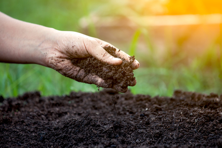 Foto de Soil in hand for planting - Imagen libre de derechos