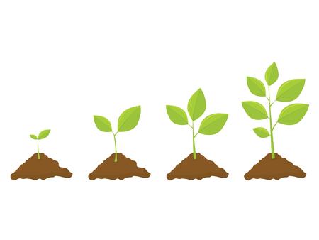 Illustration pour Growing Plant Set - image libre de droit