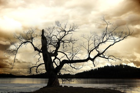 Silhouette of bare tree against sepia sky
