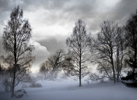 bare trees in snowstorm with moody sky