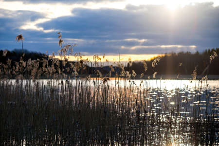 Reeds by beautiful Swedish lake at sunset