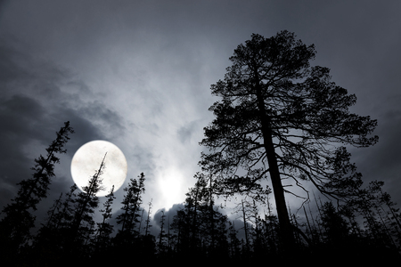 spooky forest with silhouettes of trees, dark sky and big full moon