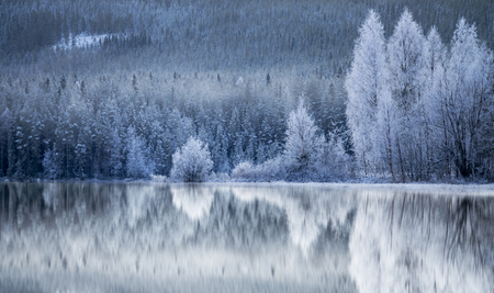 Foto de Reflection in ice of forest of conifers and birch trees covered in rime frost - Imagen libre de derechos