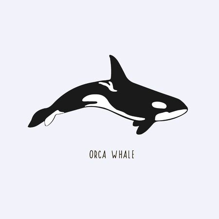 Illustration pour Orca whale. Drawing of a killer whale. Illustration of a whale - image libre de droit