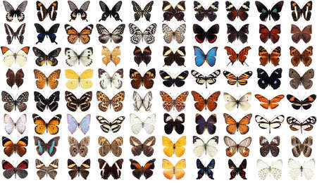 80 different butterflies