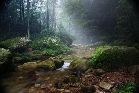 Forest stream in China, Zhan