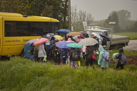 Foto per School of children on a trip on a gloomy day, intent on climbing into the school bus that accompanies them home. - Immagine Royalty Free