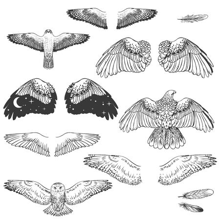 Illustration pour Birds of prey and their wings. Vector hand drawn elements - image libre de droit