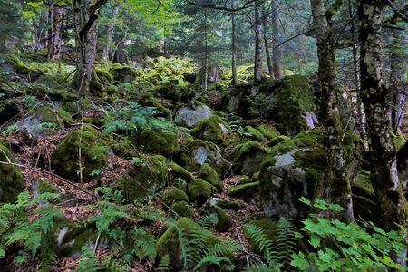 Mossy rocks in the Frankenthal-Missheimle nature reserve, France