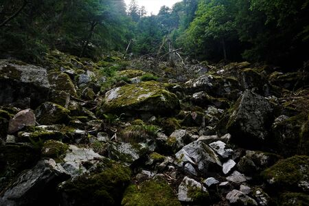 Impressive talus with mossy rocks spotted in the Vosges, France