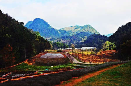 Doi Ang Khang over view