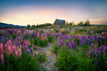 Foto de Church at Lake Tekapo at sunrise in New Zealand landscape. The Church of the Good Shepherd was built on the landscape of Lake Tekapo to the glory of God as a memorial to the pioneers of New Zealand. - Imagen libre de derechos