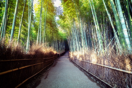 Photo pour Arashiyama Bamboo Forest famous place in Kyoto Japan. - The Arashiyama Bamboo Grove is one of Kyoto's top sightseeing for tourist travel to Kyoto and Kansai, Japan. - image libre de droit