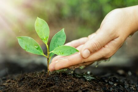 Photo pour New life of young plant seedling grow in black soil. Gardening and environmental saving concept. - image libre de droit