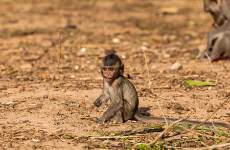 Baby monkeys  Crab-eating macaque   cold in morning   at the park of Thailand