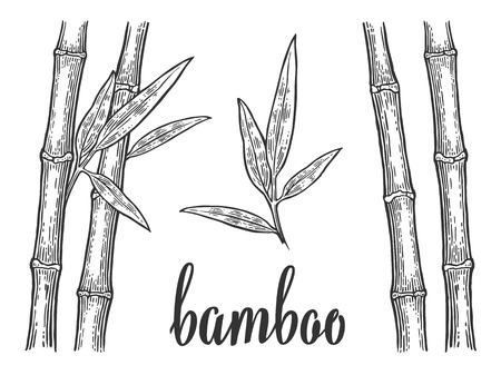Bamboo trees with leaf white silhouettes and black outline. Hand drawn design element. Vintage vector engraving illustration for logotype, poster, web. Isolated on white background.