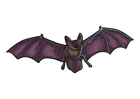 Ilustración de Bat flying vector - Imagen libre de derechos