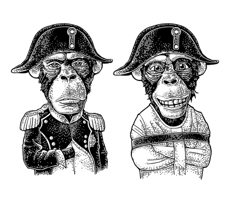 Illustration pour Monkeys dressed in the straitjacket and in the french military uniform and Napoleon cap. Vintage black engraving illustration. Isolated on white background. Hand drawn design element for t-shirt - image libre de droit