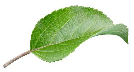 Foto für Apple leaf closeup isolated on white. - Lizenzfreies Bild