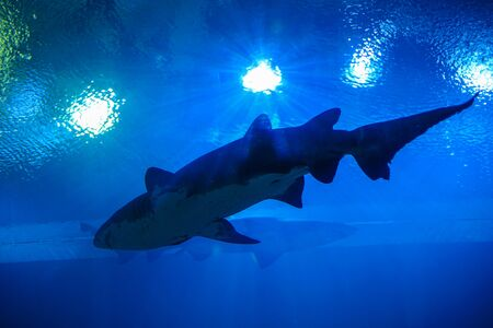 Photo pour Shark in an Aquarium, Thailand - image libre de droit