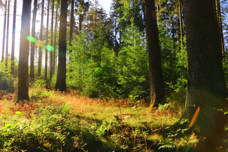 Photo pour Morning mood in the early morning in a forest near Bad Marienberg - image libre de droit