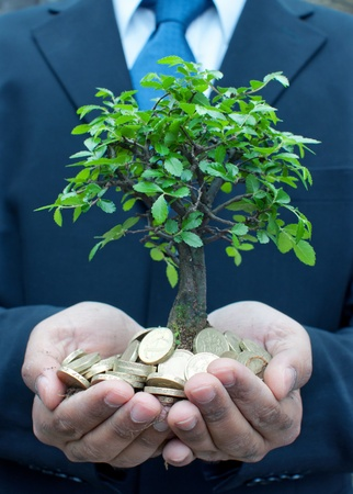 Tree in the hands of a businessman