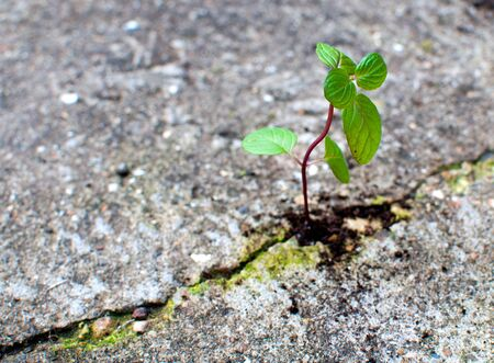 New life growing from concrete