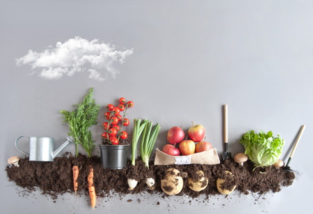 Foto de Fruits and vegetables growing in compost including carrots, mushrooms, potatoes and lettuce - Imagen libre de derechos