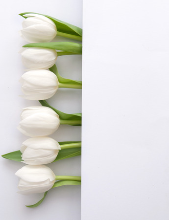 White tulips inside a fold of paper with space for text