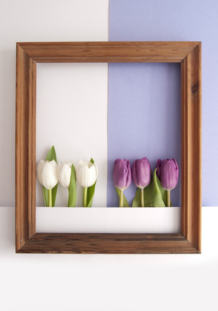White and purple tulips inside a wooden frame on a paper background
