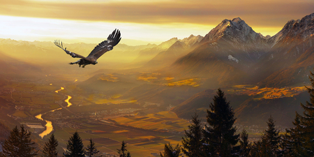 Foto de Golden Eagle flying in sunset - Imagen libre de derechos