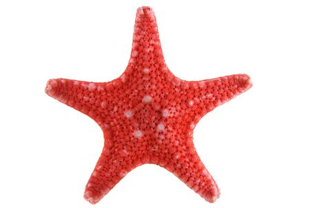 Red starfish isolated on a white background close-up
