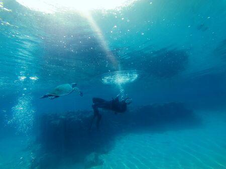 Photo pour A diver drifts as a sea turtle approaches - image libre de droit