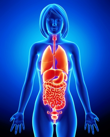 X-ray of internal organs of female body