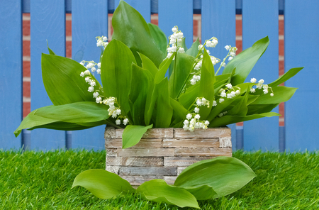 Photo pour lily of the valley bouquet in a basket in garden - image libre de droit