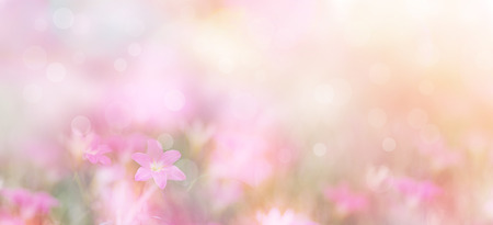 Photo for Abstract floral backdrop of small pink flowers over pastel colors with soft style for spring or summer time. Banner background with copy space. - Royalty Free Image