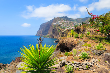Tropical plants on coast of Madeira island in summer, Portugal