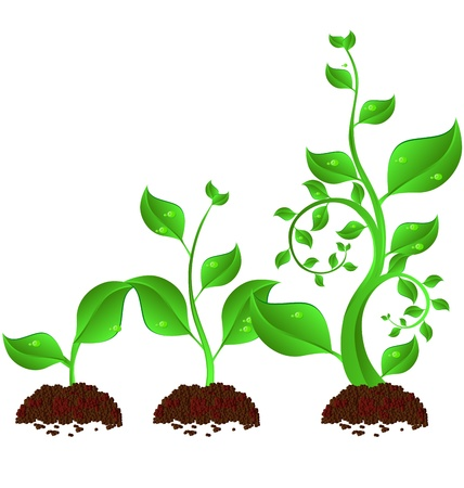 Illustration pour three green plant growth cycle on white background - image libre de droit