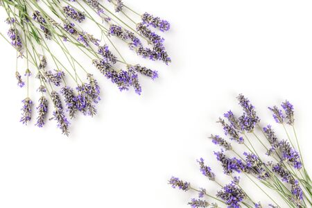 Photo pour A frame of blooming lavender flowers, shot from the top on a white background with a place for text - image libre de droit