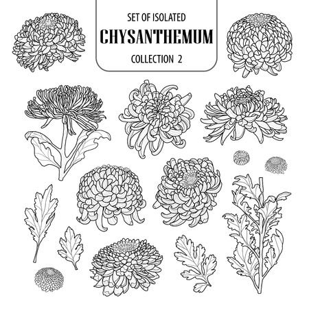Illustration pour Set of isolated chrysanthemum collection 2. Cute flower illustration in hand drawn style. - image libre de droit