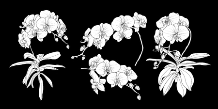Illustration pour Set of isolated white silhouette orchid branch in 4 styles set 1. Cute hand drawn flower vector illustration in white plane without outline on black background. - image libre de droit