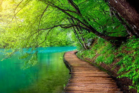 Deep forest stream with crystal clear water in the sunshine Plitvice lakes, Croatia