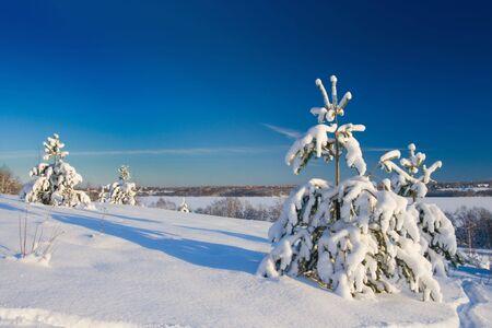 Photo pour Winter wood landscape with a snow on branches - image libre de droit