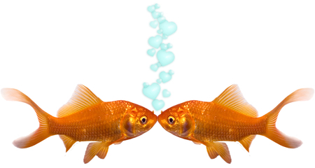 Two goldfish kissing with heart bubbles going up