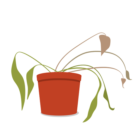 Illustration for Drying home flower in a pot. The dead plant. black and white background - Royalty Free Image