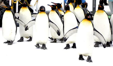 Polarbearstudio170300010