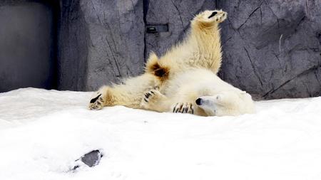 Polarbearstudio170300013