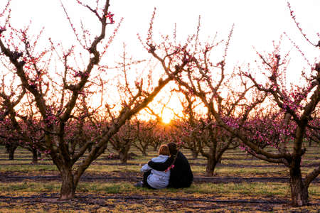 Photo pour Embracing couple sitting in a field of colorful blooming fruit trees watching the sunset. Peach trees in spring with pink flowers and sun rays in spring. The good weather is here. Love is in the air. - image libre de droit