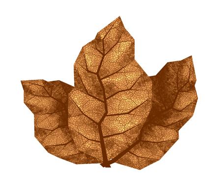 Three dry tobacco leaves